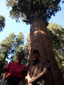 Looking Up at Tim and Jason Pau in Front of General Sherman tree in Sequoia National Park.